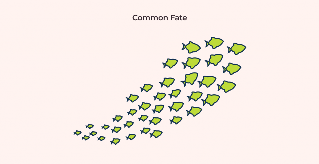 common fate design principle example: school of fishes moving together illustration